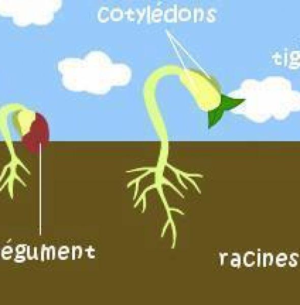 Formation Potager et permaculture