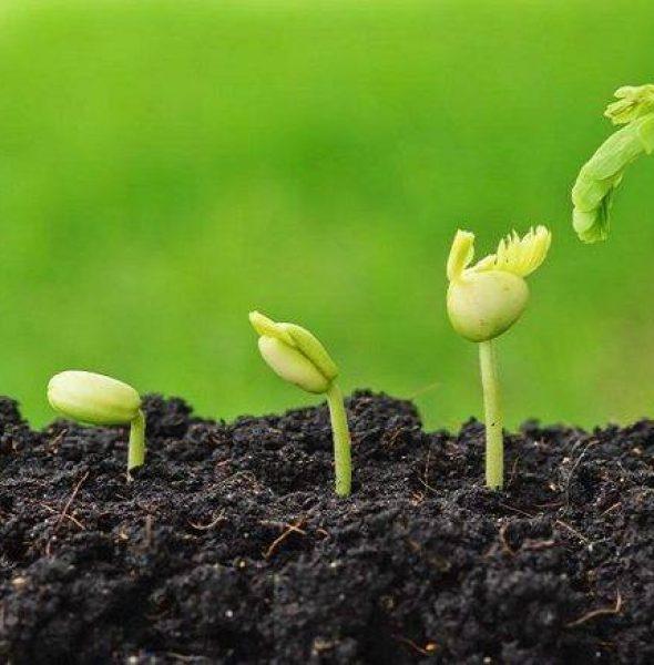 Formation de 2 jours : Potager et permaculture à Liège